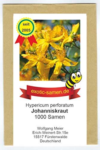 Johanniskraut - Bienenweide - Heilpflanze des Jahres 2019 - Hypericum perforatum -...