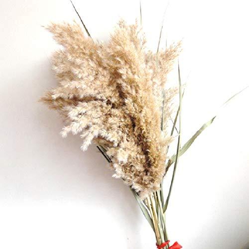 QWERTYU LIJIANME 8 pcs 20pcs real Dried Pampas Grass Decor Wedding Flower Bunch Natural Plants Decor (Color : 8 pcs raw Color, Size : M)