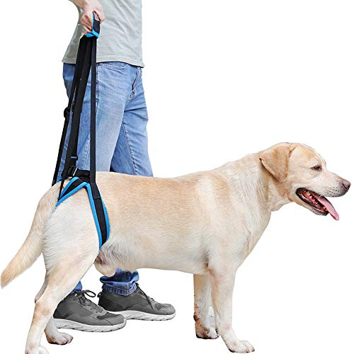 Rantow Adjustable Pet Dogs Lift Support Harness Breathable Mesh Padded Sling Straps Canine Support Rehabilitation for Injuries Arthritis Weak hind Legs & Joints, Blue (XL)