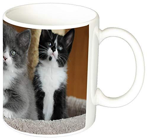 MasTazas Gatitos Gatos Kittens Cats L Tasse Mug