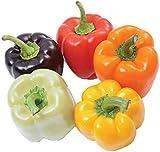 Organic Rainbow Bell Pepper 40 Seeds, 240mg