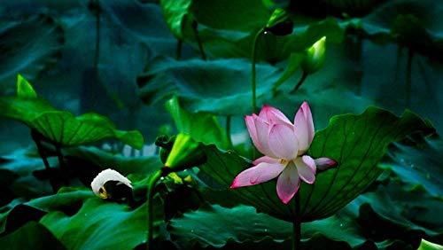 Adultos Puzzle 1000 Piezas DIY Clásico Rompecabezas de Madera para Niños Educativo Puzzles descompresión de Interesantes Juguete Lotus en el río