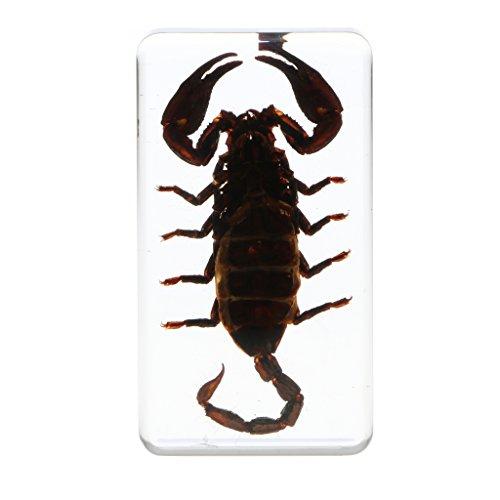 IPOTCH Juguete de Insectos Bichos de Resina Juego de Colecciones Herramienta de Enseñanza Colecciones Decoración de Escritorio - escorpión Negro b