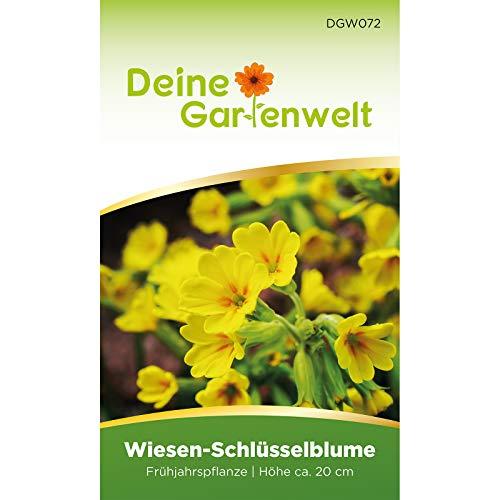 Wiesen-Schlüsselblume Samen | Schlüsselblumensamen | Primula veris Blumensamen | Wiesen-Primel