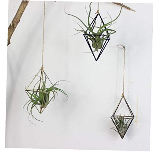 AYRSJCL 1pc d'or Suspendu Tillandsia Plantes d'air Rack métallique géométrique Fer Art Pot à Fleurs Pot Jardinage Accessoires de Bureau Accueil Décoration