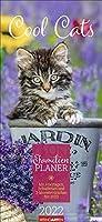 Familienplaner Cool Cats - Kalender 2022