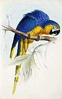 番号キットによる DIY 油絵の具 キャンバス上の番号による大人の絵画の色 青い枝にオウム 40X50Cm