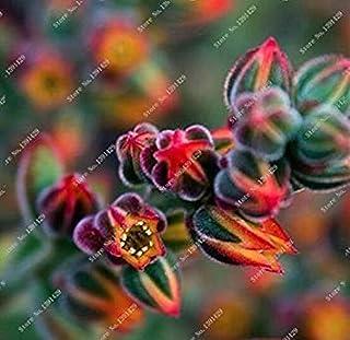 ASTONISH SEEDS: Como demostración de la imagen: 100 piezas distintas semillas Semillas Lithops Lig piedra de la flor de ca...