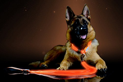 Pet Industries Premium LED Reflective Dog Leash