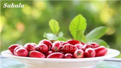Miraculine fruits tropicaux Graines rares Graines Plantes de Cajou Jardin potager Bonsai Pot Fleurs 20 Pcs 13