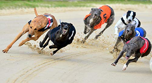 Betting systems that win greyhound racing comentarista mauro bettingin