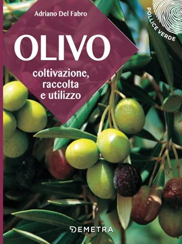 Olivo: Coltivazione, raccolta e utilizzo
