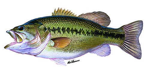 Enjoy It Wild Wings Largemouth Bass Full Color Car Sticker, Outdoor Rated Vinyl Sticker Decal