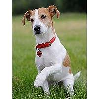 DIY5Dダイヤモンドペインティング犬動物モザイク画像ラインストーンフルラウンドダイヤモンド刺繍クロスステッチアートクリスマスギフト犬