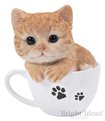 Ginger Kitten in theekopjes huisdieren