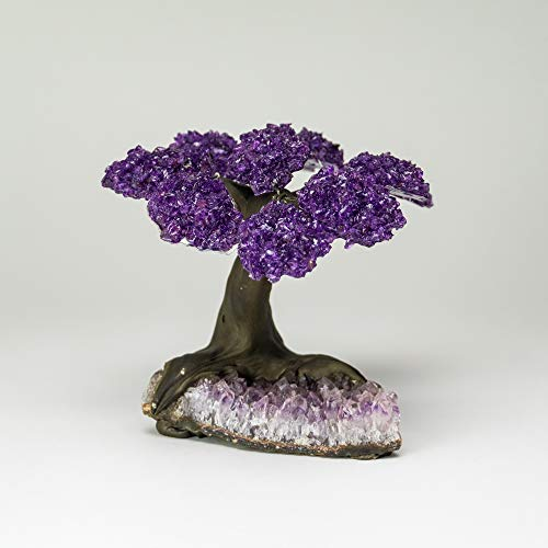 Astro Gallery of Gems The Protection Tree - Medium Amethyst Clustered Gemstone Tree on Amethyst Matrix