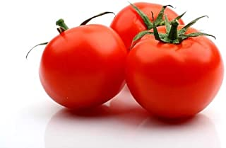 Celebrity Hybrid Tomato Seeds 30 Seed Pack by OrganicSeedSupply