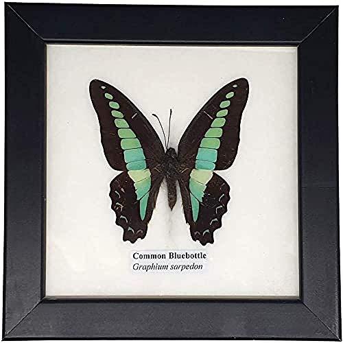 VIE Gerahmter Tierpräparat Schmetterling, Mehrfarbig, Einheitsgröße, VN-1971-BTRFLYX1