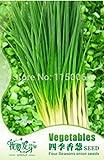 Vendedores calientes 120pcs cuatro estaciones de semillas de cebolla china, la cebolleta de semillas, semillas de hortalizas, Bonsai Pot de Plantas de jardín