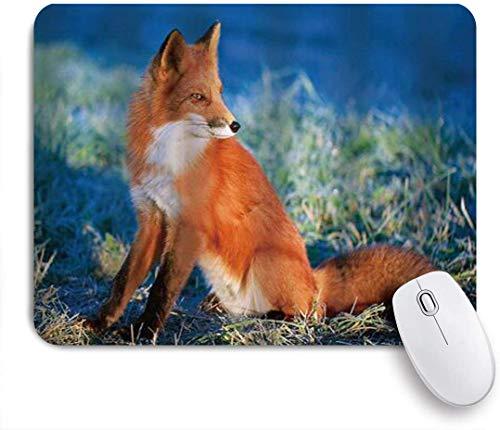 Benutzerdefiniertes Büro Mauspad,Herbstfeld am kalten Morgen mit Fox Nature Grass,Anti-slip Rubber Base Gaming Mouse Pad Mat