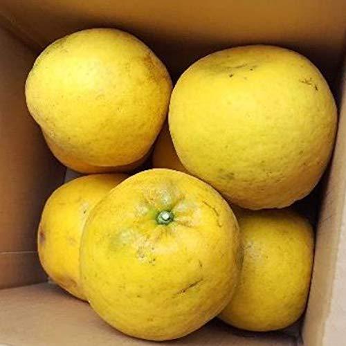 農薬をまいていない 夏文旦 3kg×1箱 ご家庭用 青山農園 河内晩柑 ザボン 和製グレープフルーツ 果汁多め 爽やかな風味