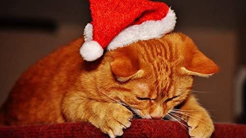 JZDTMMAN DIY MalenNachZahlen Katze Schläft Mit Weihnachtsmütze Erwachsene Kinder Zeichnen Anfänger Ohne Rahmen Wohnkultur Geschenke 40x50cm