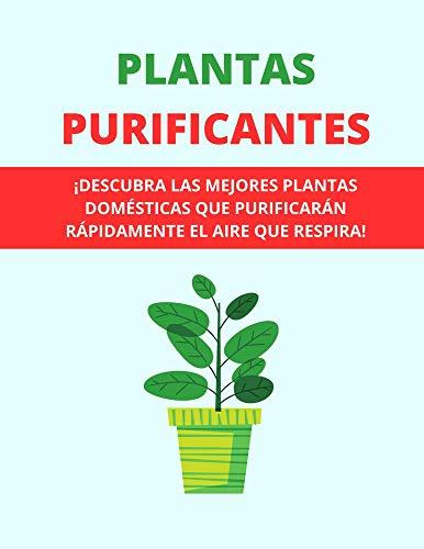 PLANTAS PURIFICANTES: ¡DESCUBRA LAS MEJORES PLANTAS DOMÉSTICAS QUE PURIFICARÁN RÁPIDAMENTE EL AIRE QUE RESPIRA!