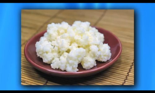 Kefir Grains - Living Probiotic Enriched 'As seen on TV'