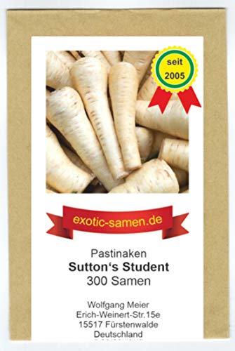 Pastinake - Sutton's Student - frosthart - bis 40 cm lang - 300 Samen
