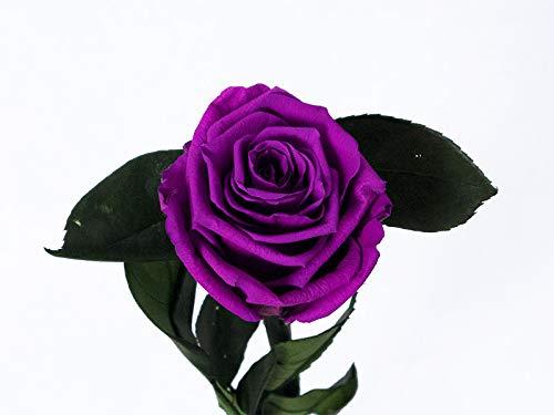 Floréate Rosa eterna preservada Morada de 25 cm