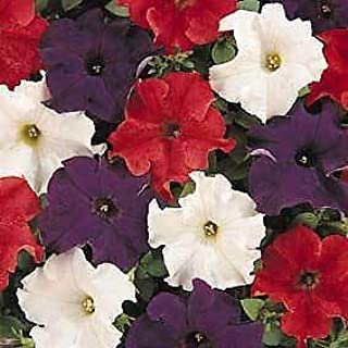 Petunia Dreams Patriot Mix 1,000 Seeds