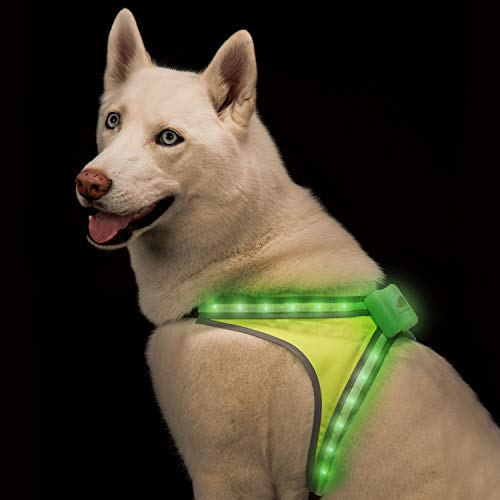 Blazin' Safety LED Lighted Dog Harness | 8 Colors Plus 6 Flashing Modes Reflective Light Vest | USB Rechargeable, Rainproof, Lightweight, Adjustable Sizing, Up to 15 Hour Runtime (Medium)