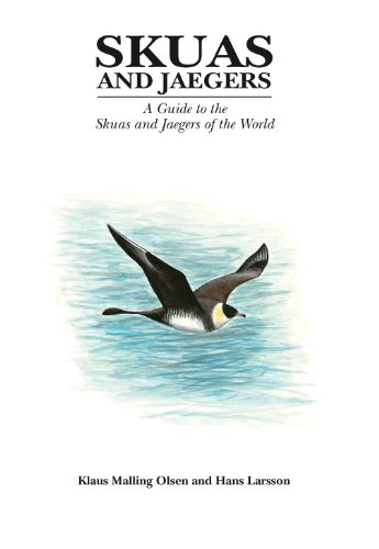 Skuas and Jaegers (Helm Identification Guides) (English Edition)