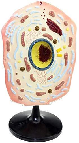 ETDWA Modell der Anatomie Mobil - Modell von Tier- und Pflanzenzellen - Mikroskopische Modellstruktur von Zellen Tiermodell der Zellstrukturgröße, Tier
