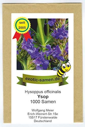 Ysop blau - mehrjährig - Bienenweide - Hysoppus officinale 1000 Samen