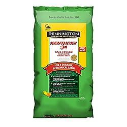 commercial Pennington Kentucky 31 Tall Fesk Seeds, 25 lbs. grass seed