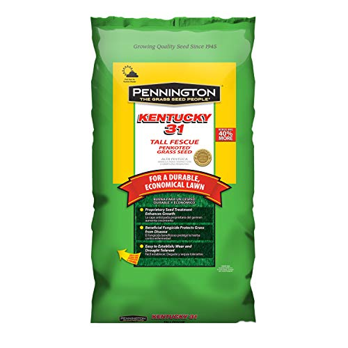 Pennington Kentucky 31 Tall Fescue Grass Seed, 25 LB