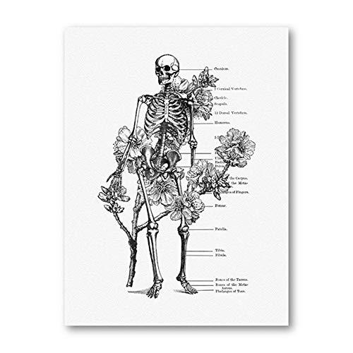 De La Lona BotáNico AnatomíA ClíNica Decoracion Marco De La AnatomíA Blanco Humano Estampados Flor Vintage Pared Arte Cuadro EducacióN Pintura Esqueleto Negro 50x70cm Poster Esqueleto 50x70cm