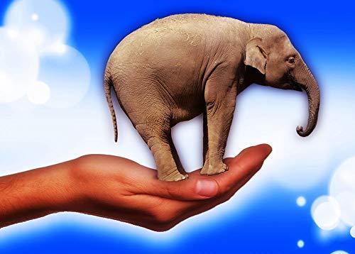 AQgyuh Puzzle 1000 Piezas Elefante, tenencia, en, Palma Puzzle 1000 Piezas paisajes Juego de Habilidad para Toda la Familia, Colorido Juego de ubicación.50x75cm(20x30inch)