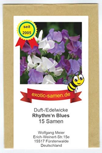 Edelwicke - Duftwicke - Bienenweide - Rhythm of the Blues Mix - 15 Samen