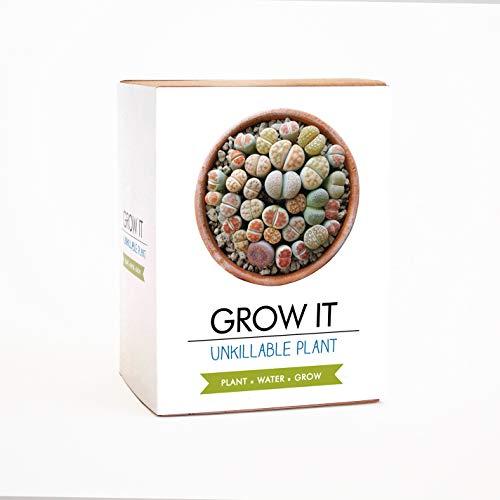 Gift Republic Grow It Kit Unkillable Plant, Multi