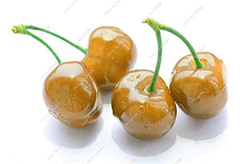 Coloré cerise semences Bonsai extérieur des plantes rares sucré non-OGM Big Fruit Cerise Haute Germination meilleur cadeau pour les enfants de 30 Pcs 14