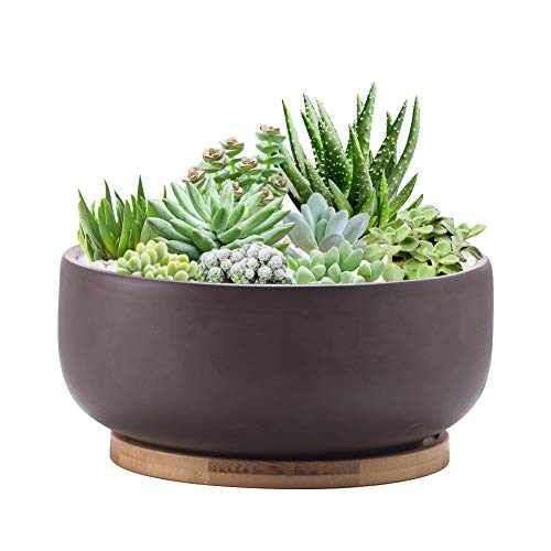 EPFamily Terracotta Shallow Succulent Planter, 8 Inch Planter Pot with Bamboo Tray, Clay Flower Pot Indoor and Outdoor Planter with Drainage Hole, Brown