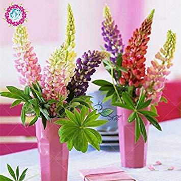 VISTARIC 22: Heißer Verkauf! 100 PC/Beutel Bonsai Calla-Lilien-Samen Indoor-Blumensamen Schöne Garten Dekoration Yard Pflanze Blumentöpfe Pflanz 22