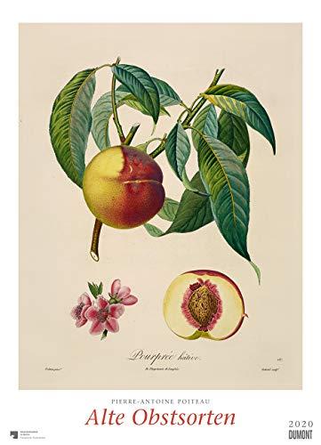 Pierre Antoine Poiteau: Alte Obstsorten 2020 – DUMONT Kunst-Kalender – Poster-Format 49,5 x 68,5 cm