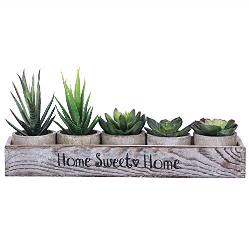 5 Pcs Small Potted Succulent Plants in Wood Planter Box Assorted Aloe Cactus Succulent in Gray Pots...