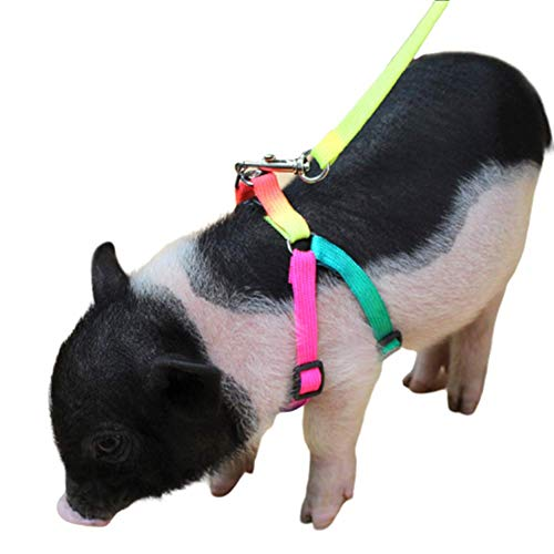 Mini Pig Adjustable Harness Leash for Hog Piggy and Other Small Animals -Ferret, Rabbit, Dog, Cat
