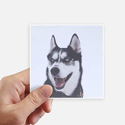 DIYthinker Big Dog Nieve Husky Imagen Square Stickers 10cm Pared Maleta portátil Motobike Decal 8pcs 10cm x 10cm
