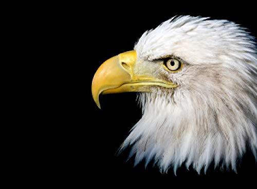 HJZS Rompecabezas para Adultos 1000 Piezas Rompecabezas águila Calva Juego Educativo Juguetes Juegos de Rompecabezas educativos para Rompecabezas Familiares