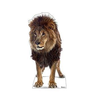 Advanced Graphics Lion Life Size Cardboard Cutout Standup